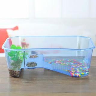 beli-aquarium-kura-kura.jpg