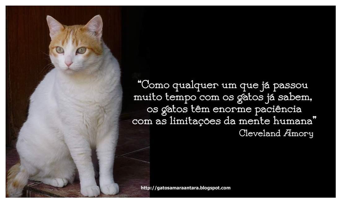 Frasesamor Frases Amor Gatos