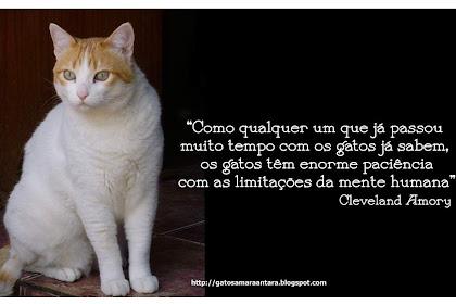 Lo Mejor De Frases De Amor Animal Gatos En Frasesamor