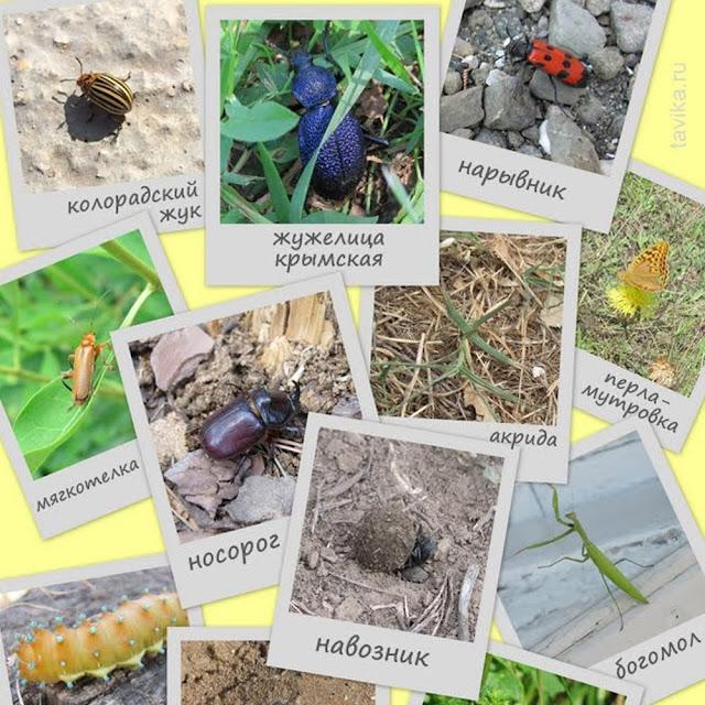 насекомые Крыма