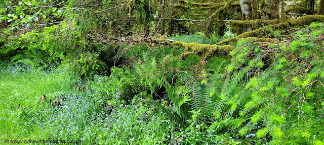 Moss, Wildflowers, Ferns are just so wonderful