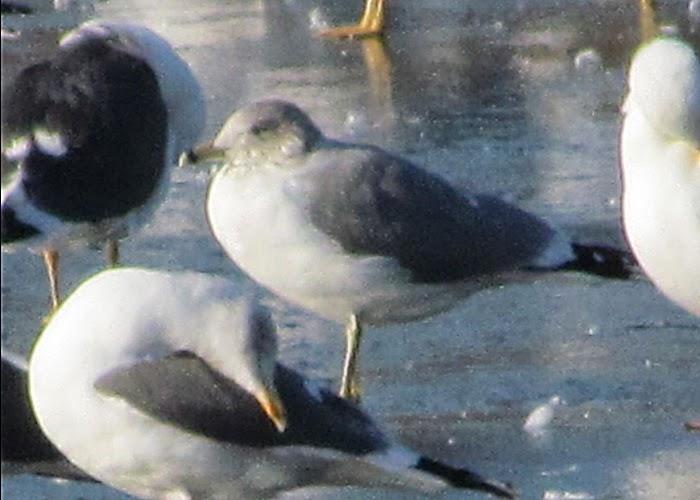 Friends of Priorslee Lake Wildlife Site: News