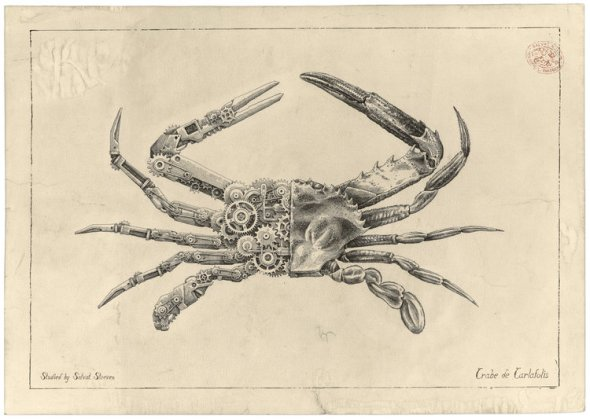 Steeven Salvat ilustrações mecânicas biológicas de animais crustáceos desenhos científicos vintage