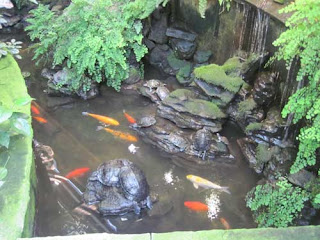 Turtles & Koi prepare for olfactory overload.