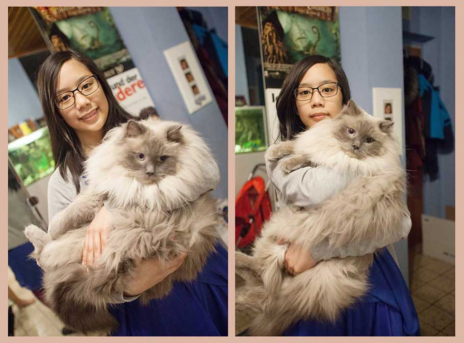 daughter carrying ragdoll cat