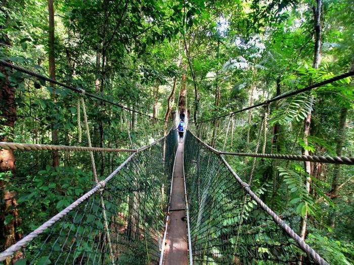 Taman Negara suspension bridges, Malaysia