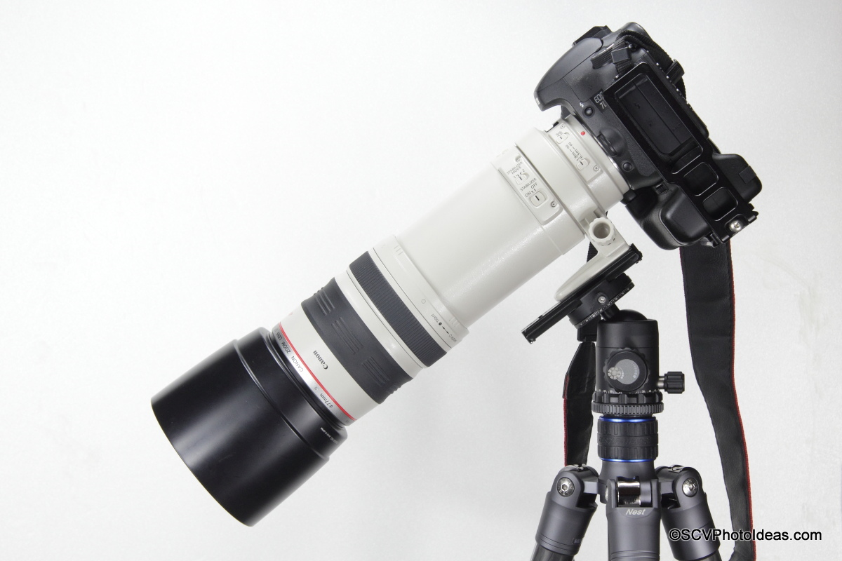 Canon EOS 7D w/ Grip + EF 100-400 L IS USM balanced on Sunwayfoto DB-36DDH by lens foot