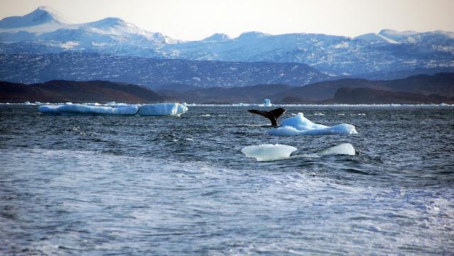 """""""No habrá marcha atrás"""": Advierten de alteraciones en el Ártico que pueden afectar seriamente a la Tierra"""