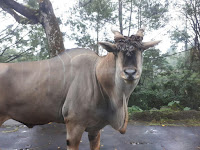 Masuk Ke Kandang Binatang Buas Di Taman Safari Indonesia