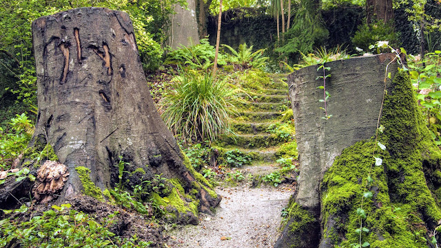 Tree stumps at Mount Usher Gardens in County Wicklow