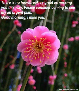 There is no heartbreak as great as missing you this way. Please consider coming to see my an urgent plan. Good morning, I miss you.