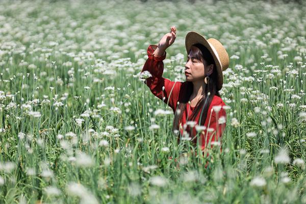 彰化田中韭菜花田盛開就像九月雪景,雪白花海夢幻美照輕鬆拍