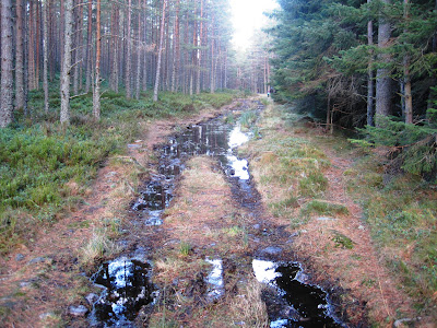 Deeside walks: go up Pannanich, near the summit of Pannanich