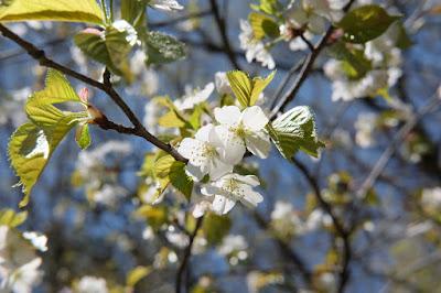 工芸と喫茶ひとつ石の裏の棚田や里山の風景 山桜