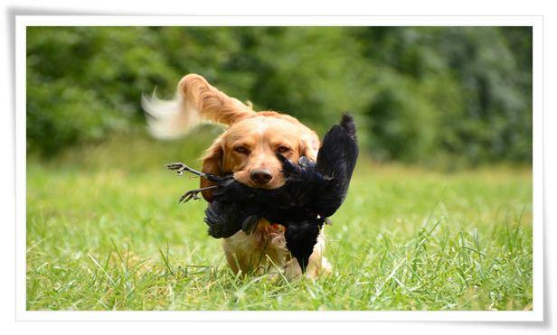 hunting dog training near me
