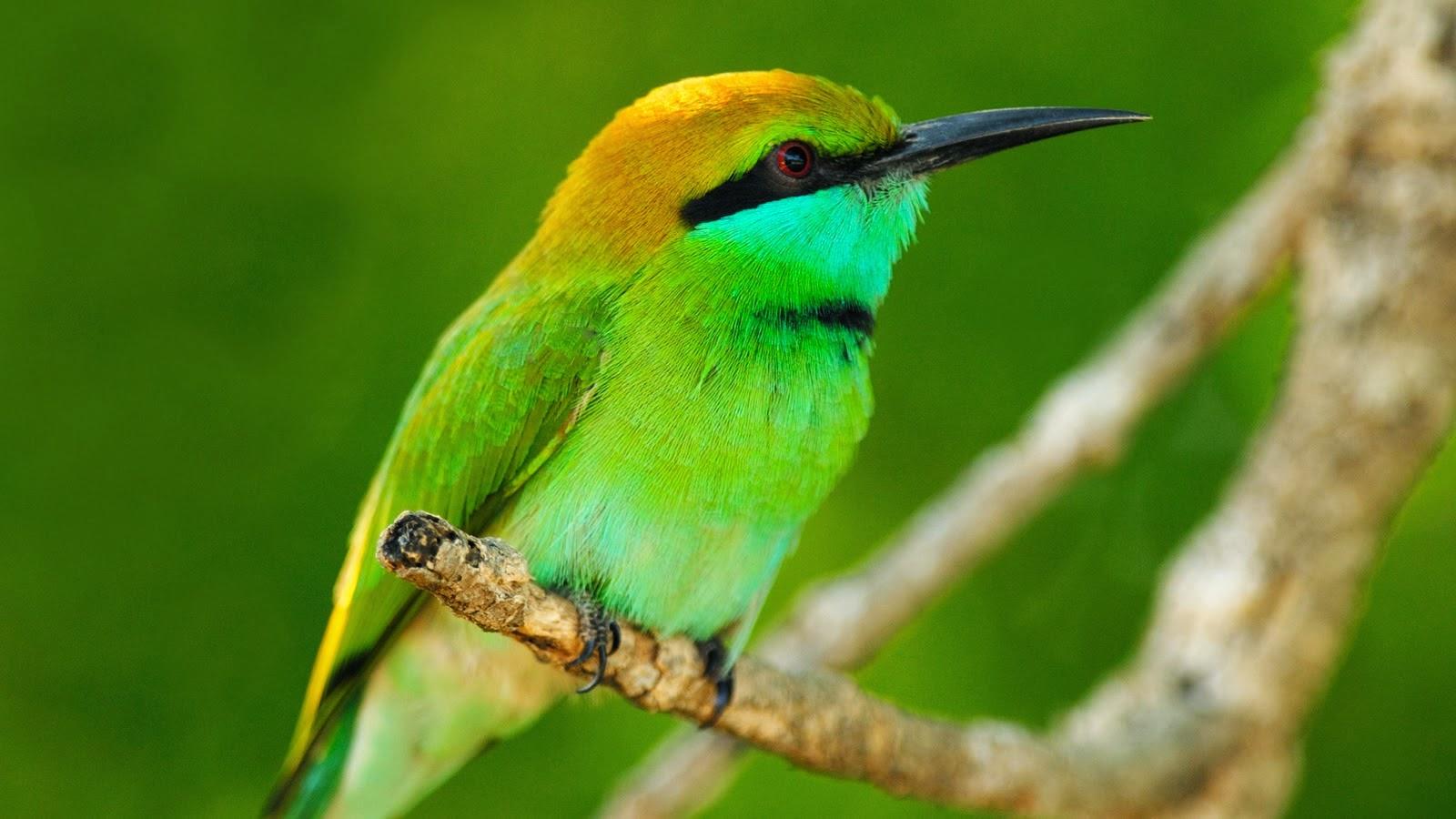 wallpaper islamic informatin site: Animals & birds Wallpapers