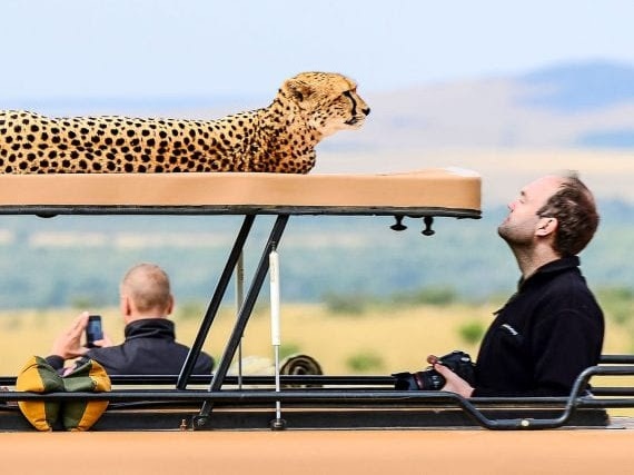 The Essentials For Planning Your First Safari
