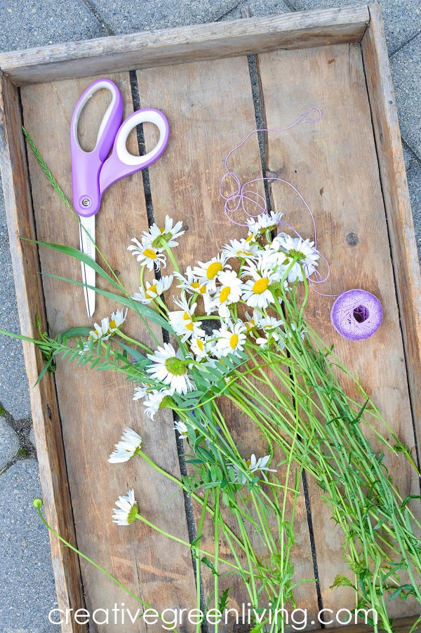 tray of wild daisies with scissors and string - supplies needed to make a daisy chain or flower crown with just flowers