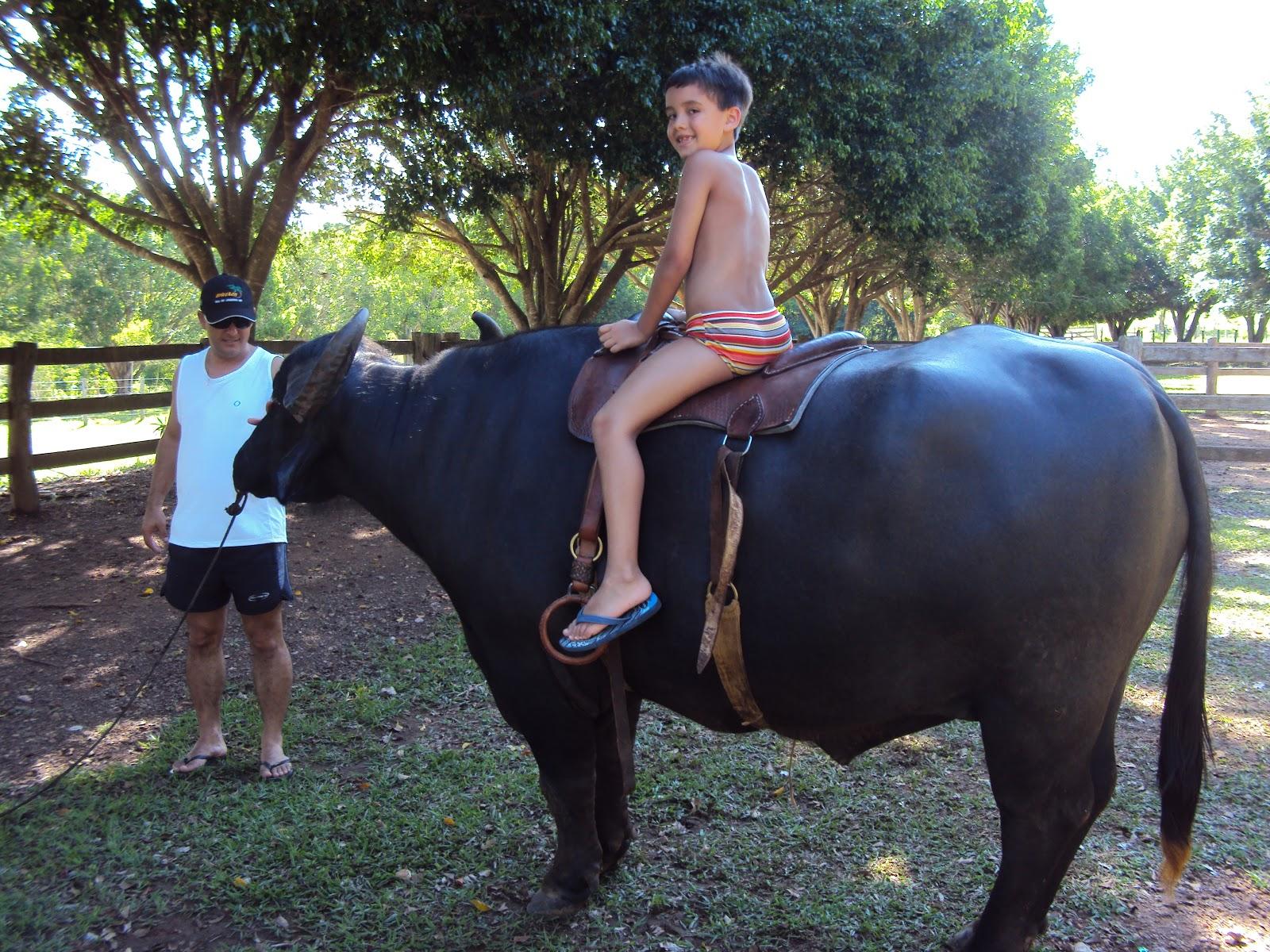 Búfalo domesticado