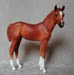 standing PBA Filly
