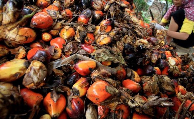 Indonesia Akan Terus Dorong Minyak Kelapa Sawit Diakui Dunia