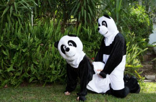 Panda porn sex
