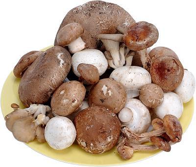Mushroom Supplier Company in Raipur