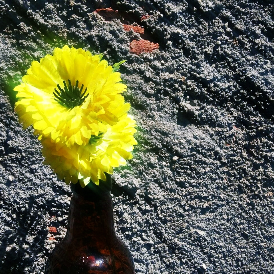 Projeto Fotográfico 7 on 7 - tema flores - mês setembro - Blog Confident