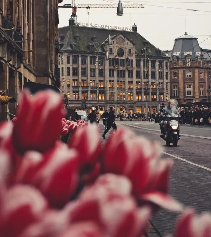 nizozemska_holandija_cvijece_tulipani_proljece