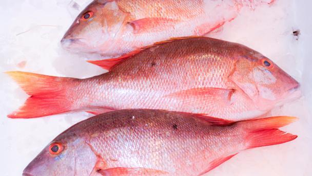 Sabor de pargo congelado - Pargo congelado, filés de pargo à venda, preços de atacado de pargo vermelho, benefício do pargo vermelho