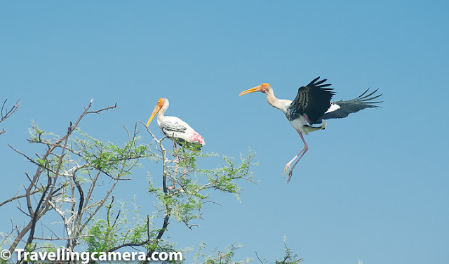 Bird of the month, Stork, Painted Stork, Wooly-necked stork, black-necked stork, crane, Keoladeo National Park, Bharatpur Bird Sanctuary, Bird Watching, Bird Photography, Birding