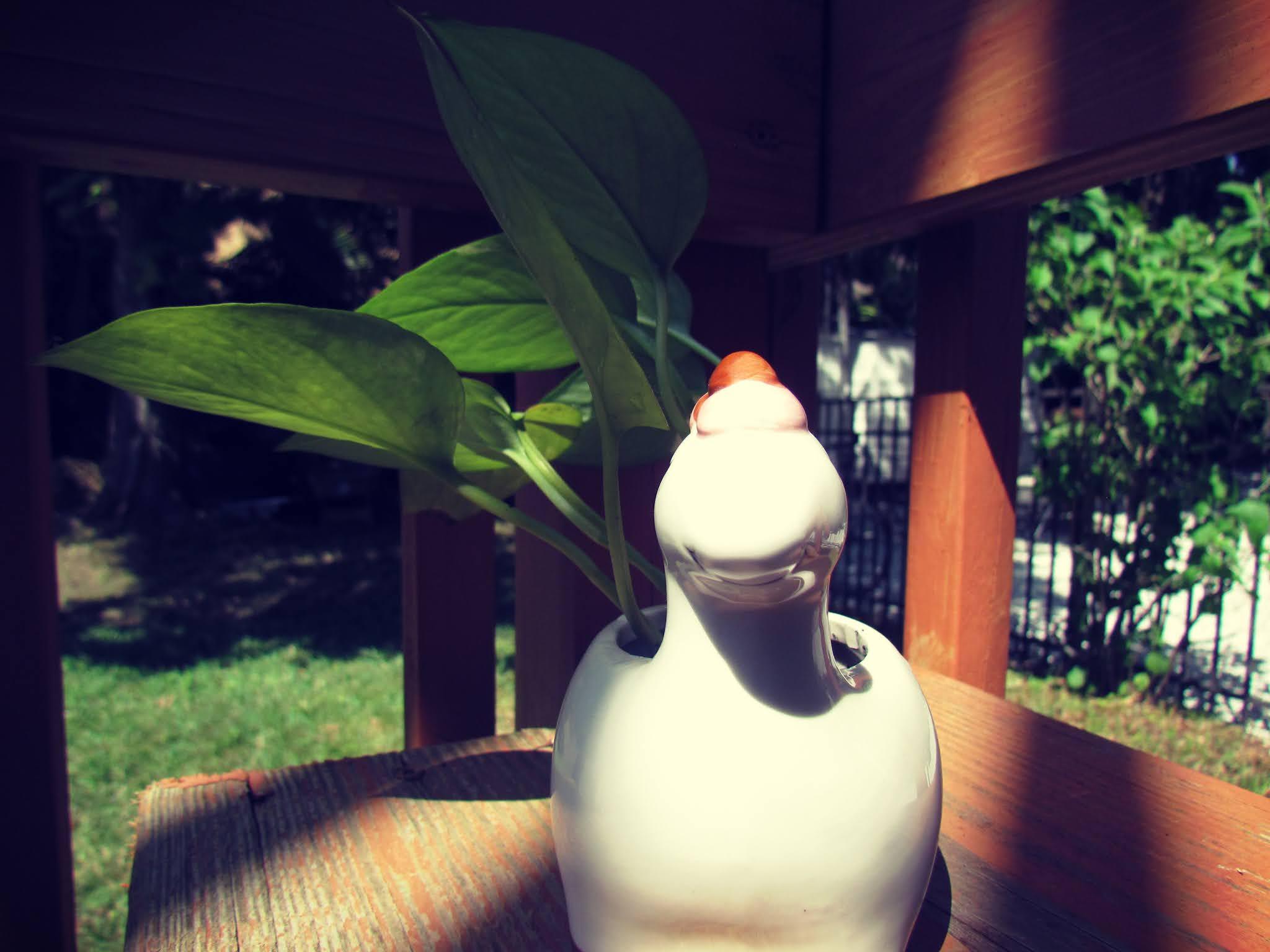 a cute planter, unicorn planter, novelty plant stand, golden pothos plant cutting
