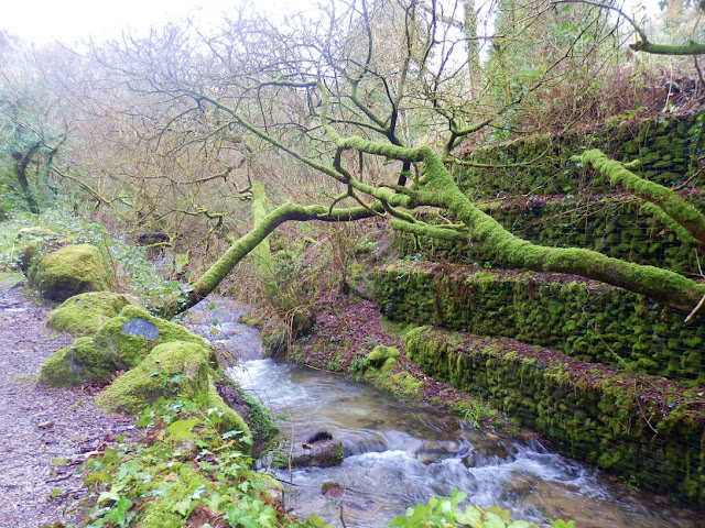 Gover Valley, river, trees and moss.
