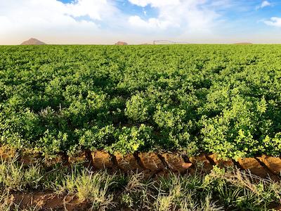 Green farm stock image