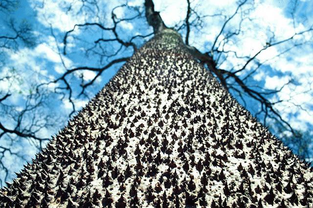दुनिया के सबसे खतरनाक पेड़ | The Most Dangerous Trees in the World