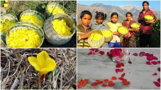 Phole Dehi Festival, Uttarakhand Tradition