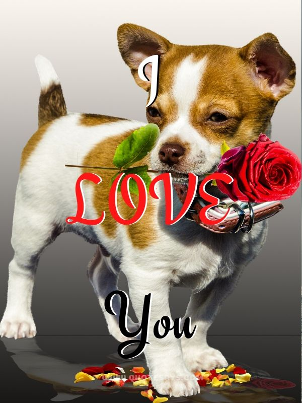 I Love You Images Dog holding red Rose in mouth