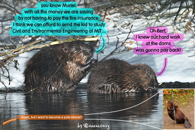Beavers, dams and fires (by @sciencemug)