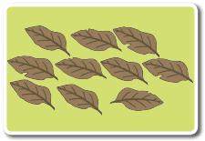banyak daun berguguran yang dapat Siti kumpulkan www.jokowidodo-marufamin.com