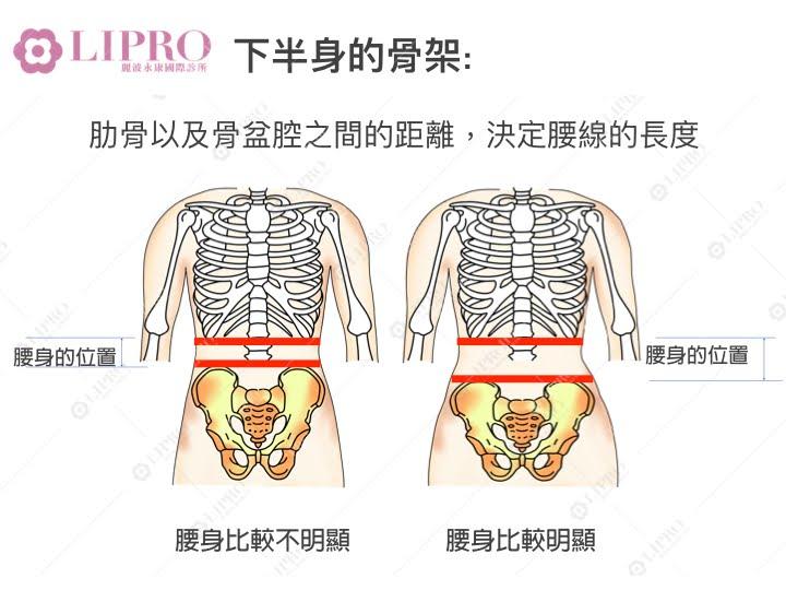 骨架與腰身的關係