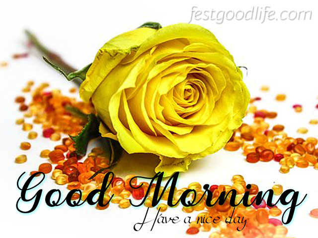 cute yellow good morning images hd  pics and photo download