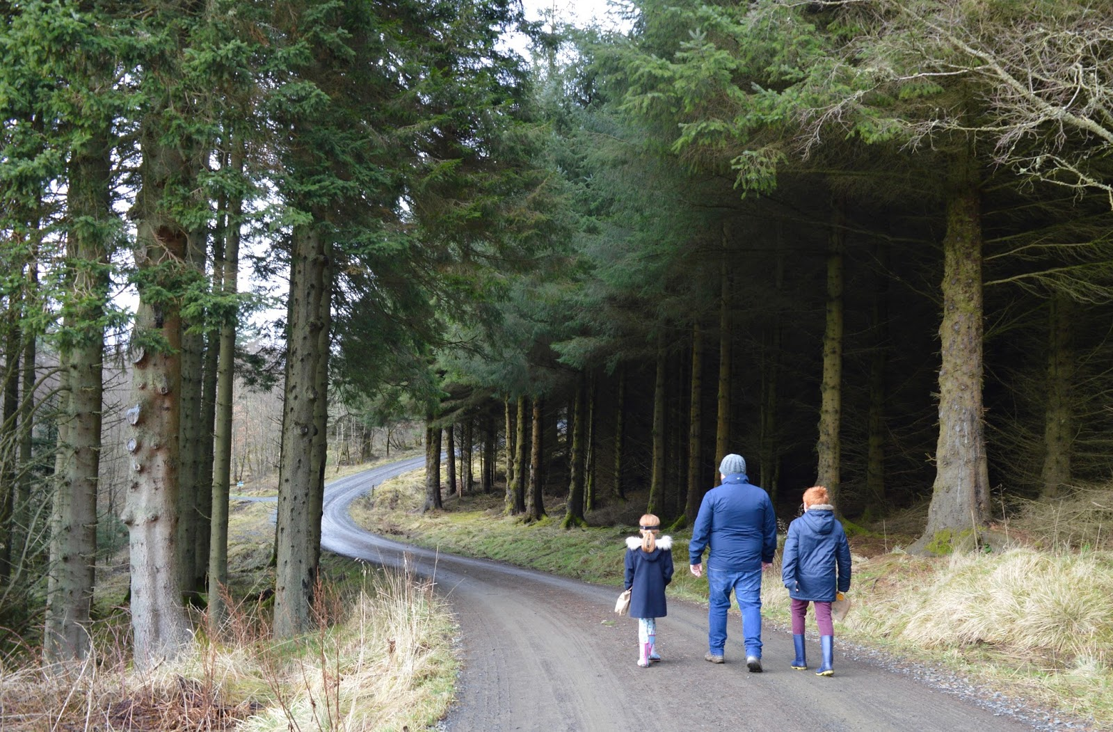 10 Magical Winter Walks for Children in North East England - Kielder Forest