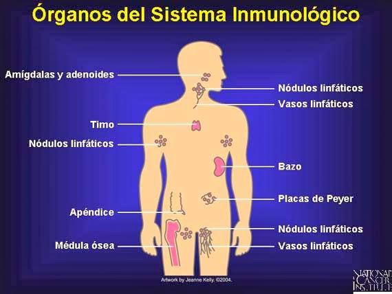 que son los nodulos en el cuerpo humano