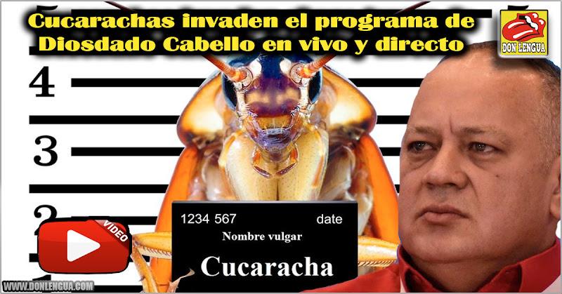 Cucarachas invaden el programa de Diosdado Cabello en vivo y directo