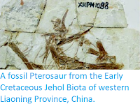 https://sciencythoughts.blogspot.com/2014/05/a-fossil-pterosaur-from-early_8.html