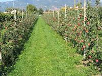 Silvopastoril y producción de frutos
