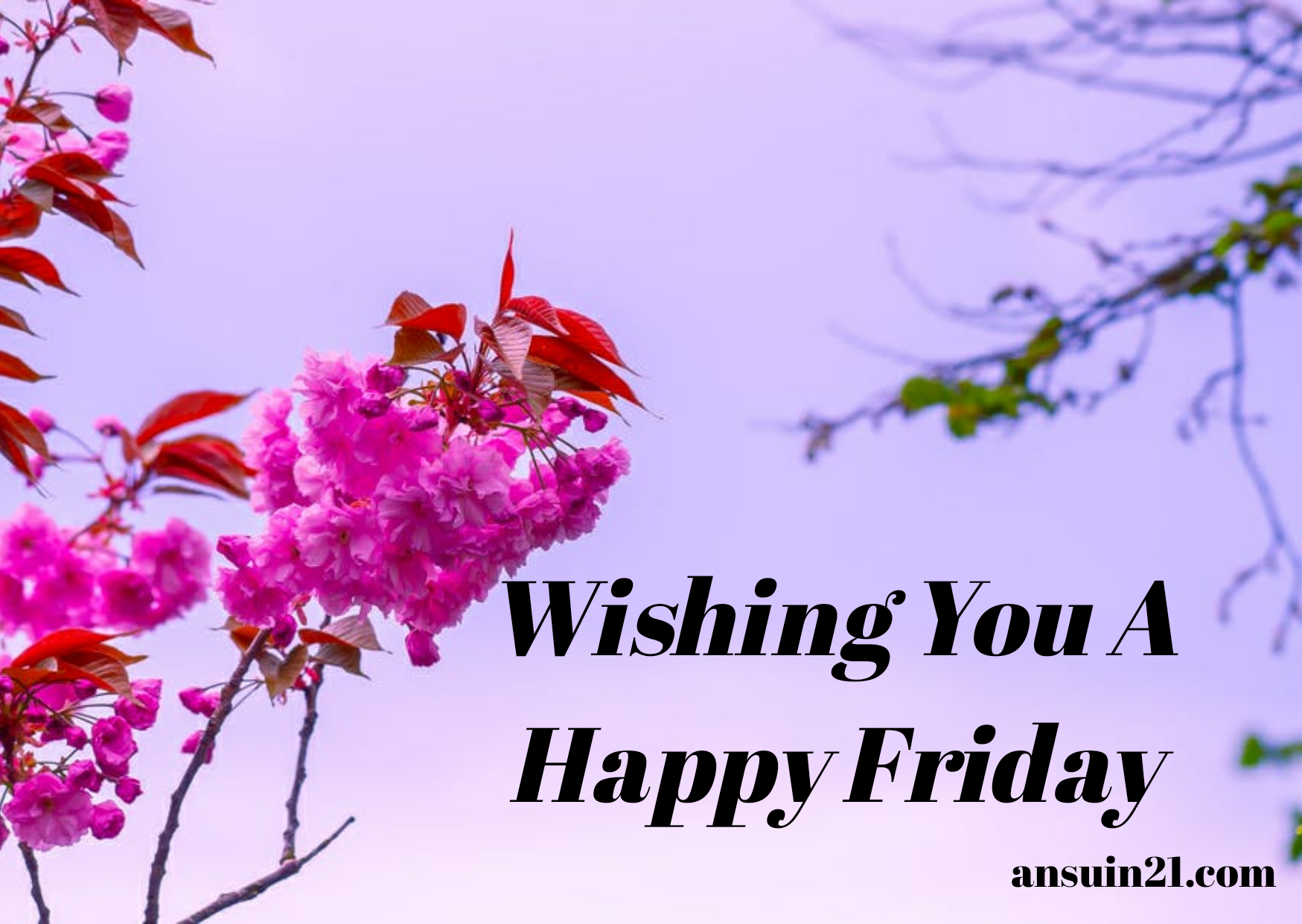 Happy Friday Wishes, Images, Wallpaper, Quotes, For Whatsapp, happy Friday images