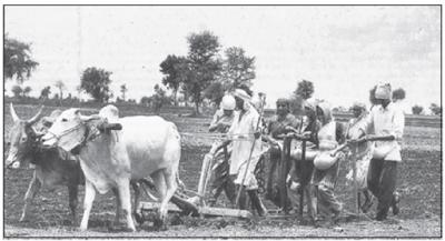 कृषि का उद्भव एवं विकास