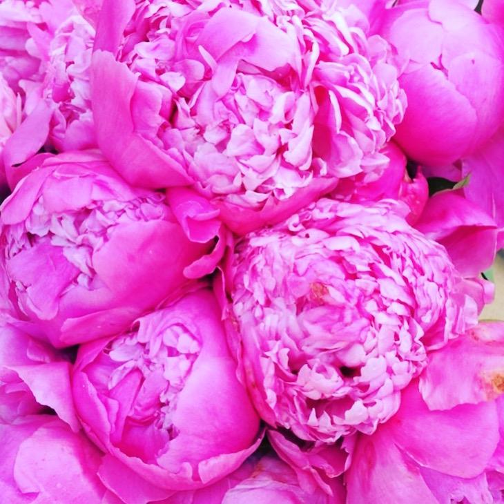 Happy-Monday-Pink-Peonies-Vivi-Brizuela-PinkOrchidMakeup