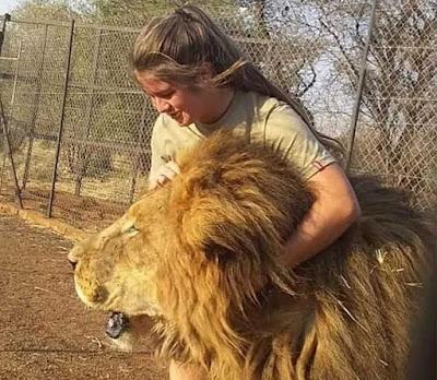 Gambar Swane van Wyke dan singa jantan